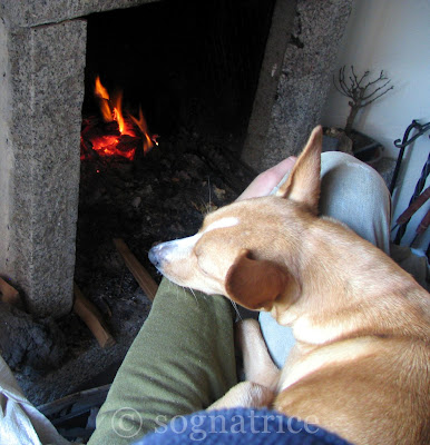 Stella on P's lap by the fire