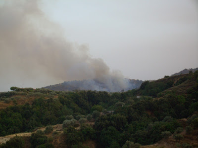 forest fire in santa caterina, calabria, southern italy