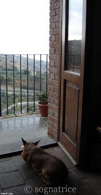 watching the rain