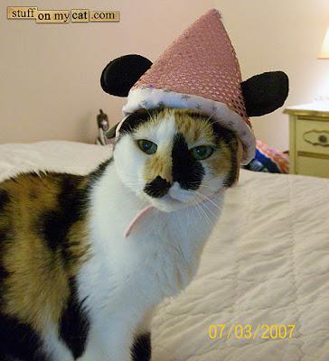 happy birthday cat funny. hot happy birthday cat funny.