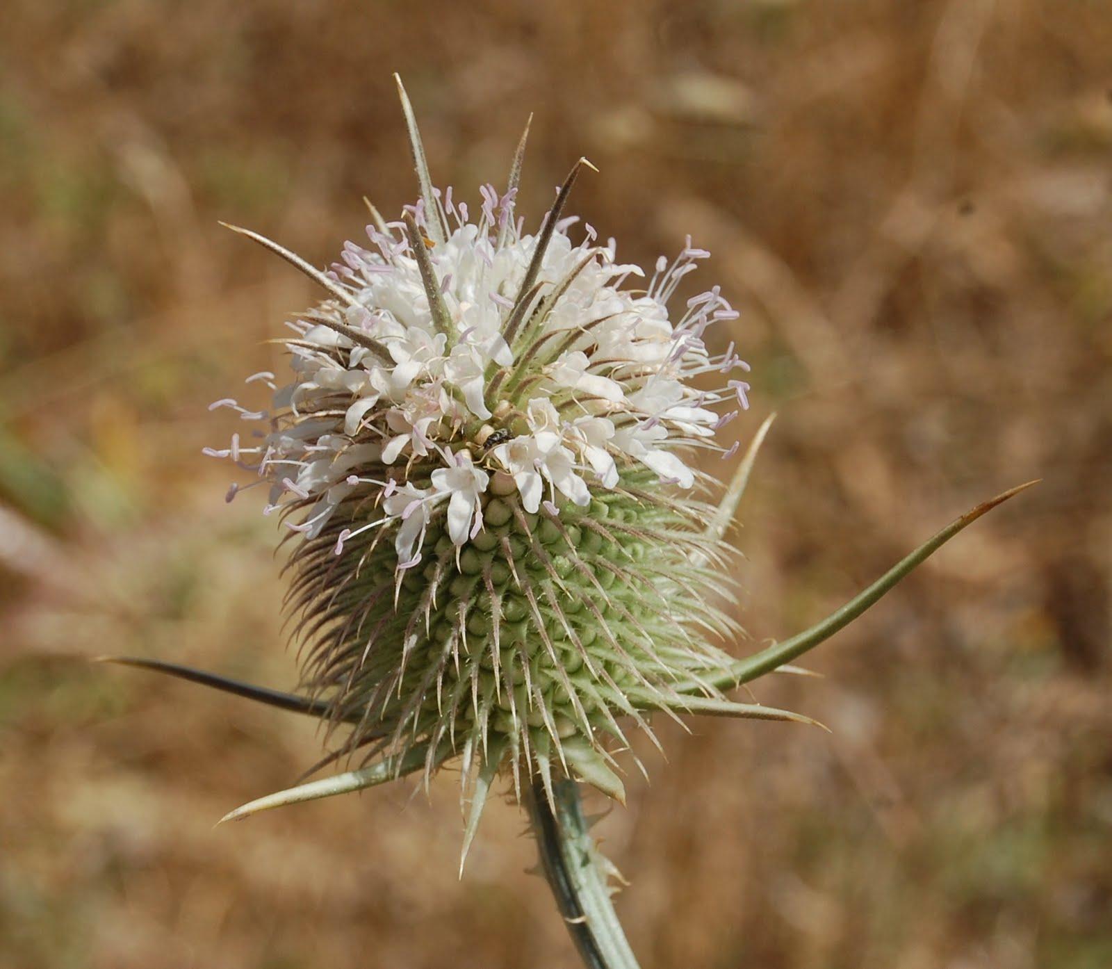 tipo de plantas de interior