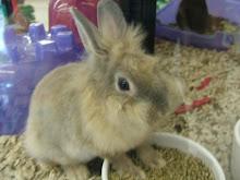 Rabbit B.