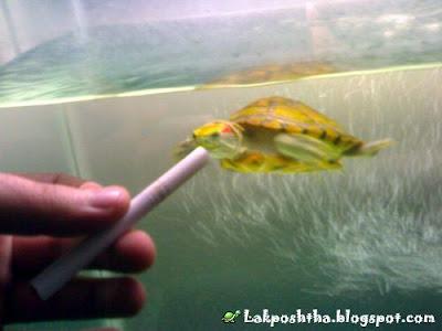 لاکپشت سیگاری من