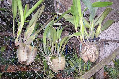 Plantas orquideas dicas noticias curiosidades dicas como - Como cuidar una hortensia de exterior ...