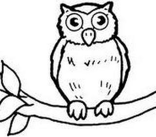 Gambar Burung Hantu