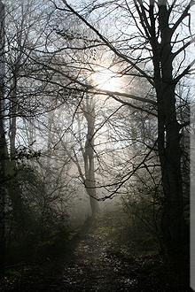 Bosque de Baio