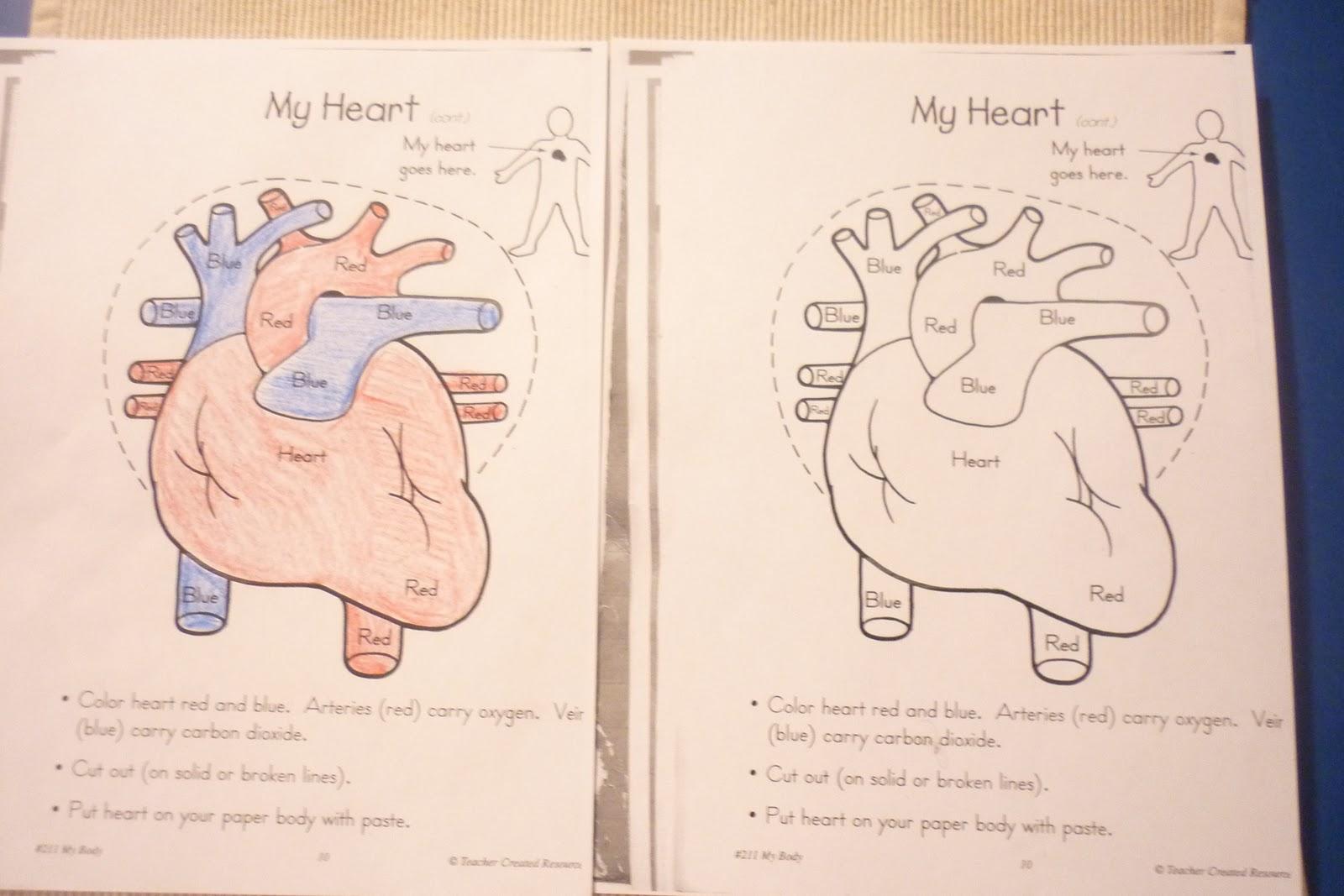 Human Heart Color