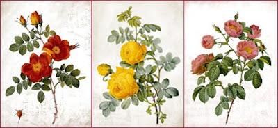 róże vintage, posters