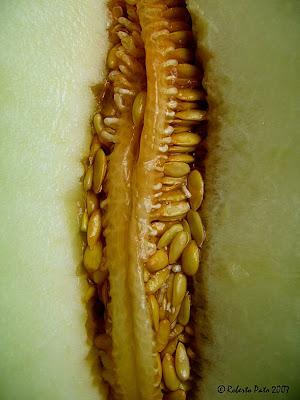 busco semillas o esquejitos H%C3%BAmedas+pepitas+de+mel%C3%B3n