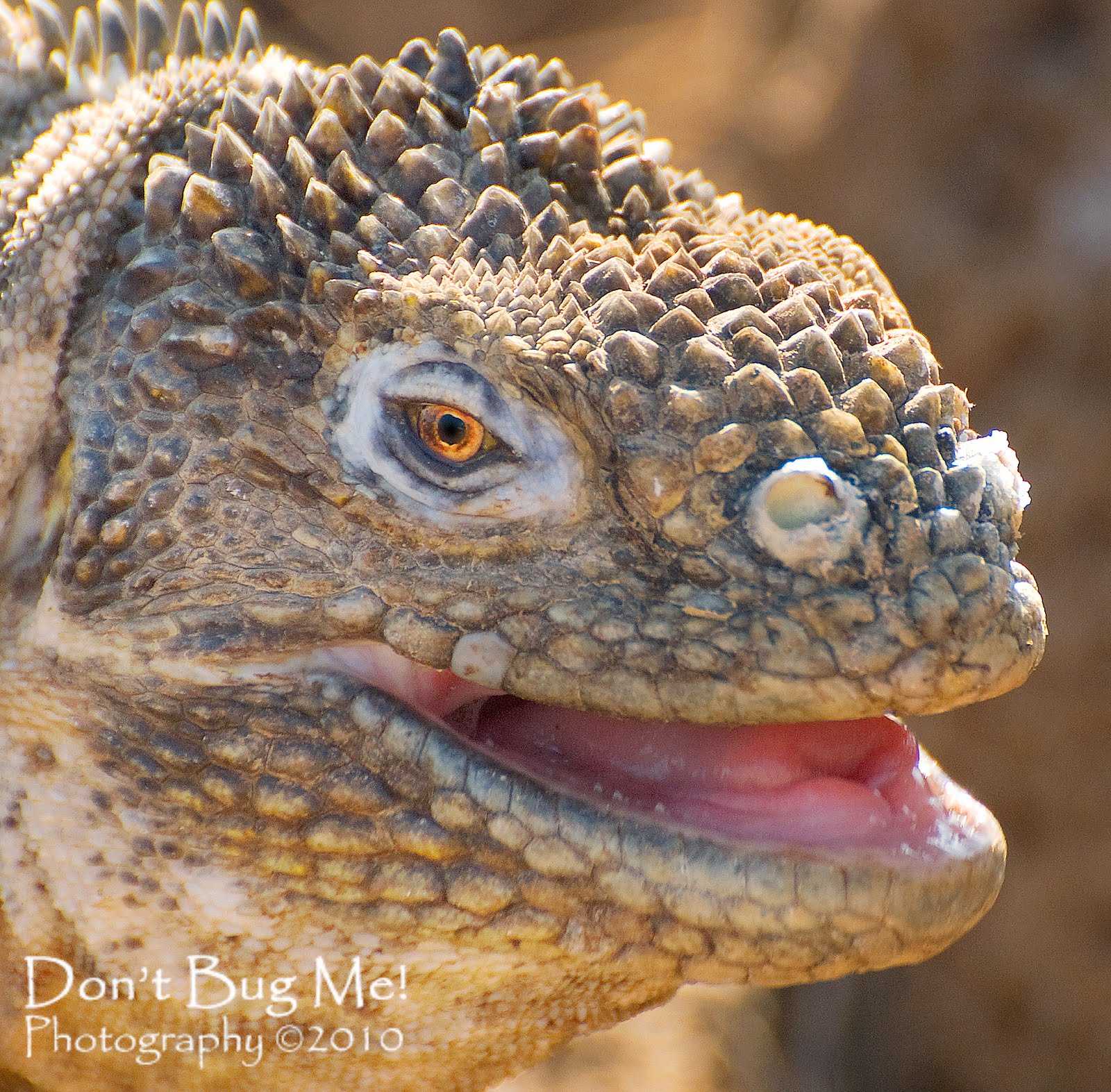 Pictures of Big Lizards on Animal Picture Society