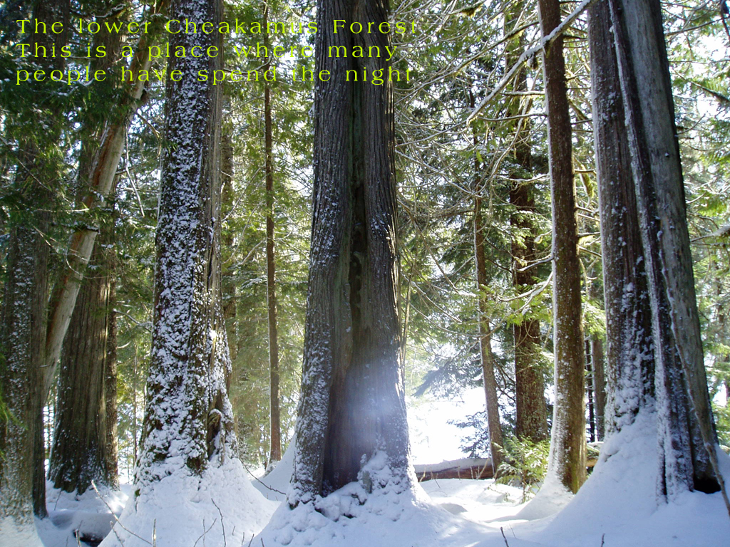 [forest.jpg]