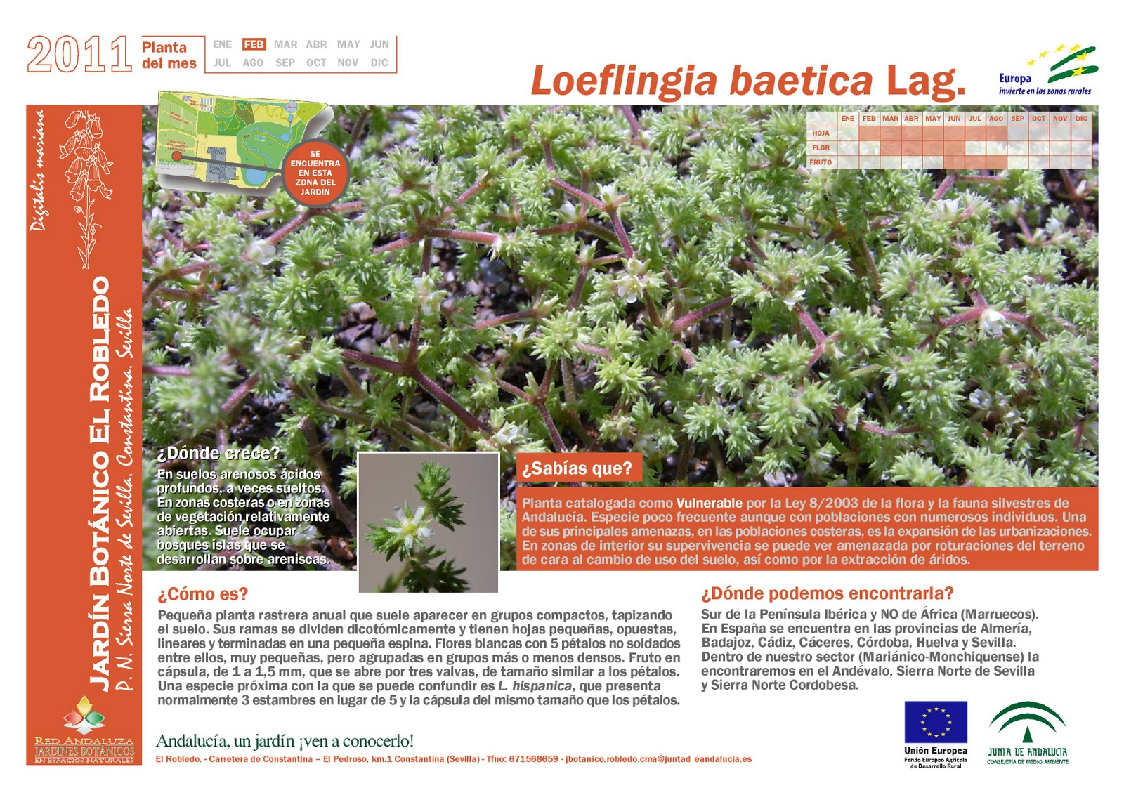 Ambor febrero 2011 for Programacion jardin botanico