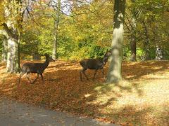 پاییز  86   حومه کپنهاک