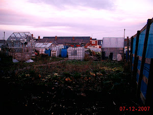 Allotment Year