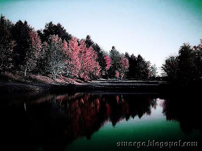 """Эффект """"Красная природа"""" в Фотошоп"""