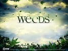 Mary-Louise Parker in Weeds TV Series Wallpaper 2