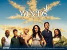 Mary-Louise Parker in Weeds TV Series Wallpaper 3