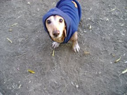 Thug Dog Heidi