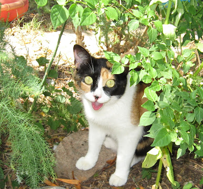 Kitten Cat... gardening guard.