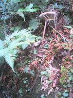 森の中でキノコに出会う