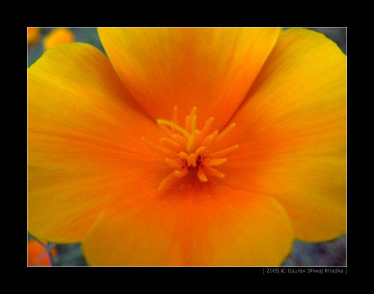 [gaurav.dhwaj.khadka.flower.nepal+(6).jpg]