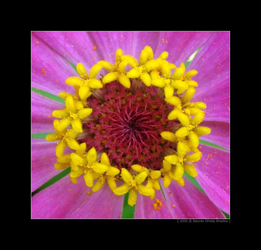 [gaurav.dhwaj.khadka.flower.nepal+(1).jpg]