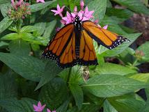 Butterfly, 2004