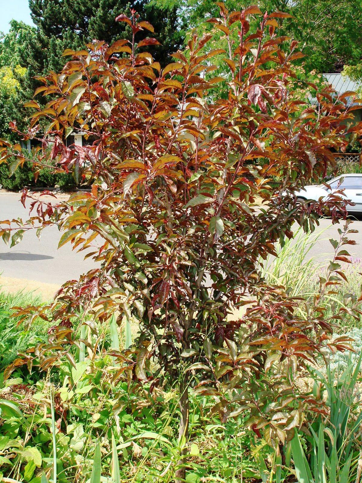 Growing Greener in the Pacific Northwest: More Kitchen Garden
