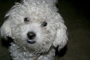 dog health, dog health information, dog health questions, dog health care