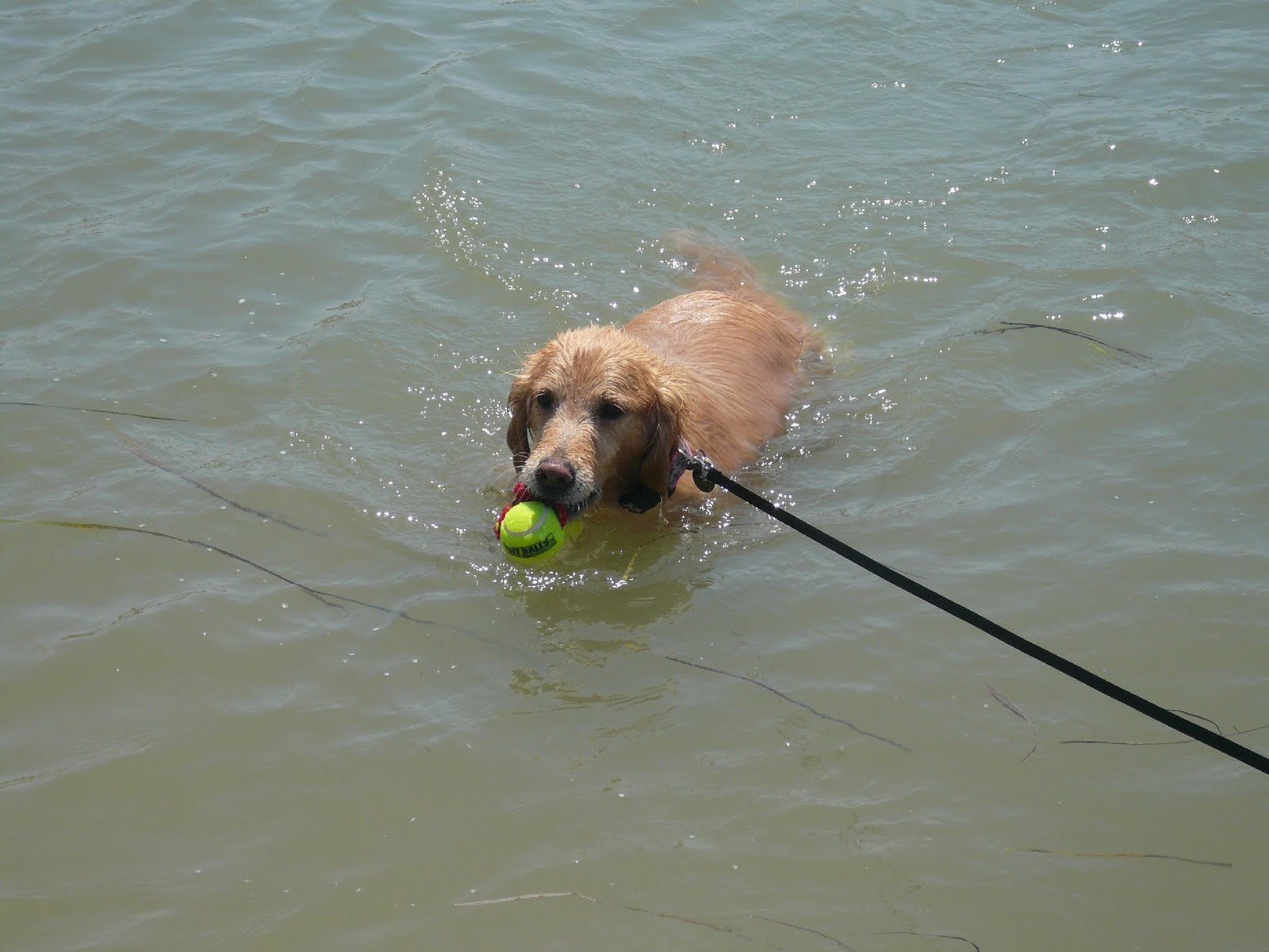 Dog Friendly Dog Friendly Beach At Carlsbad Lagoon