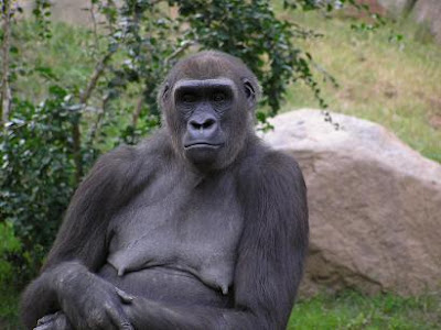 gorilla grabbes womans breast