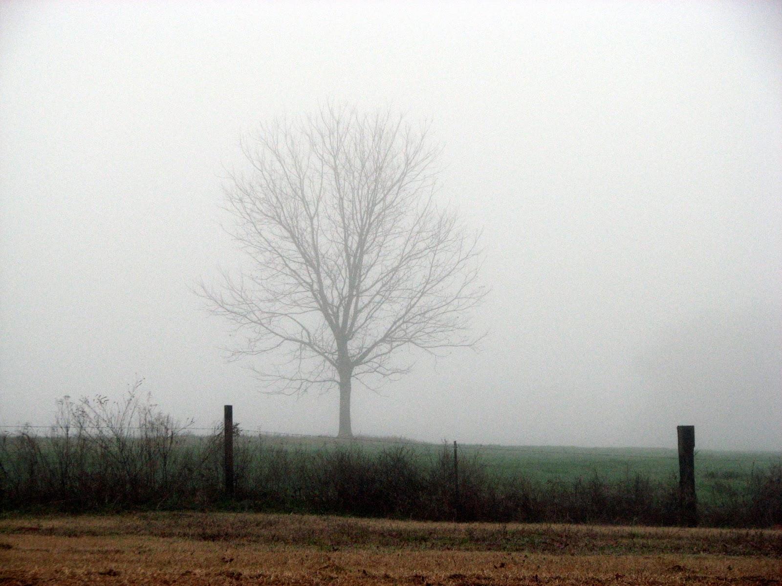 Terrace Street Foggy Weather