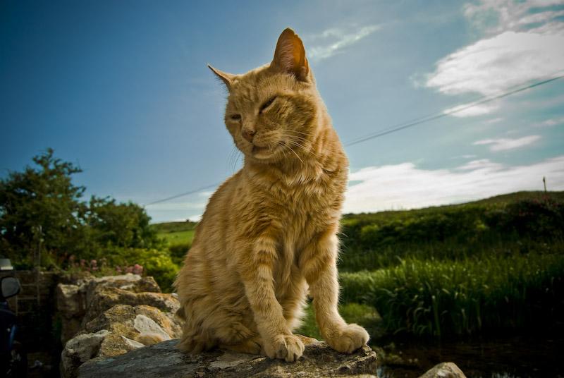 [cat1.jpg]