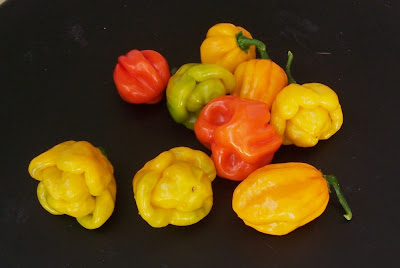 scotch bonnet, habaneros