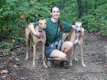 Can Greyhounds Eat Normal Adult Dog Food