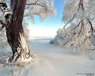 Зимний пейзаж на опушке леса.