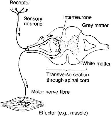 Nervous System: October 2009