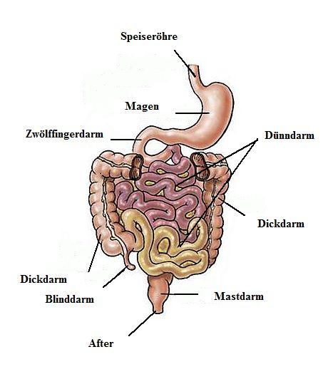 Hämorrhoiden Und Co Anatomisch Physiologisches