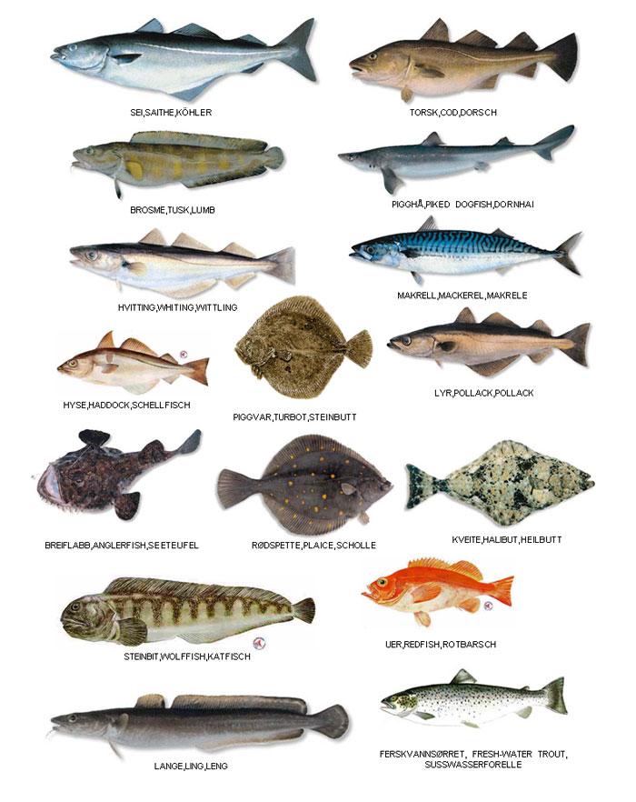 На нашей базе можно поймать большое разнообразие видов рыб.