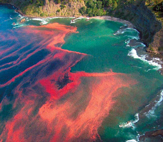 FENOMENA 9. Red Tides
