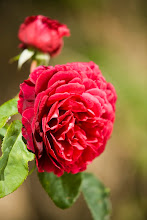 William Shakespeare Austinros
