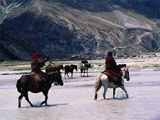 wild in Himalaya