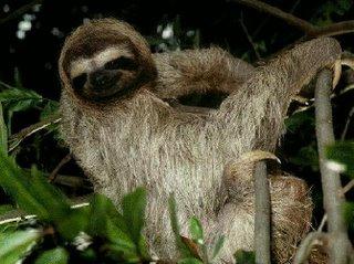 [Sol+the+Sloth.jpg]