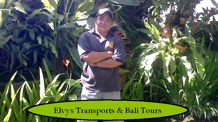 Elvys Transport & Bali tours Guide