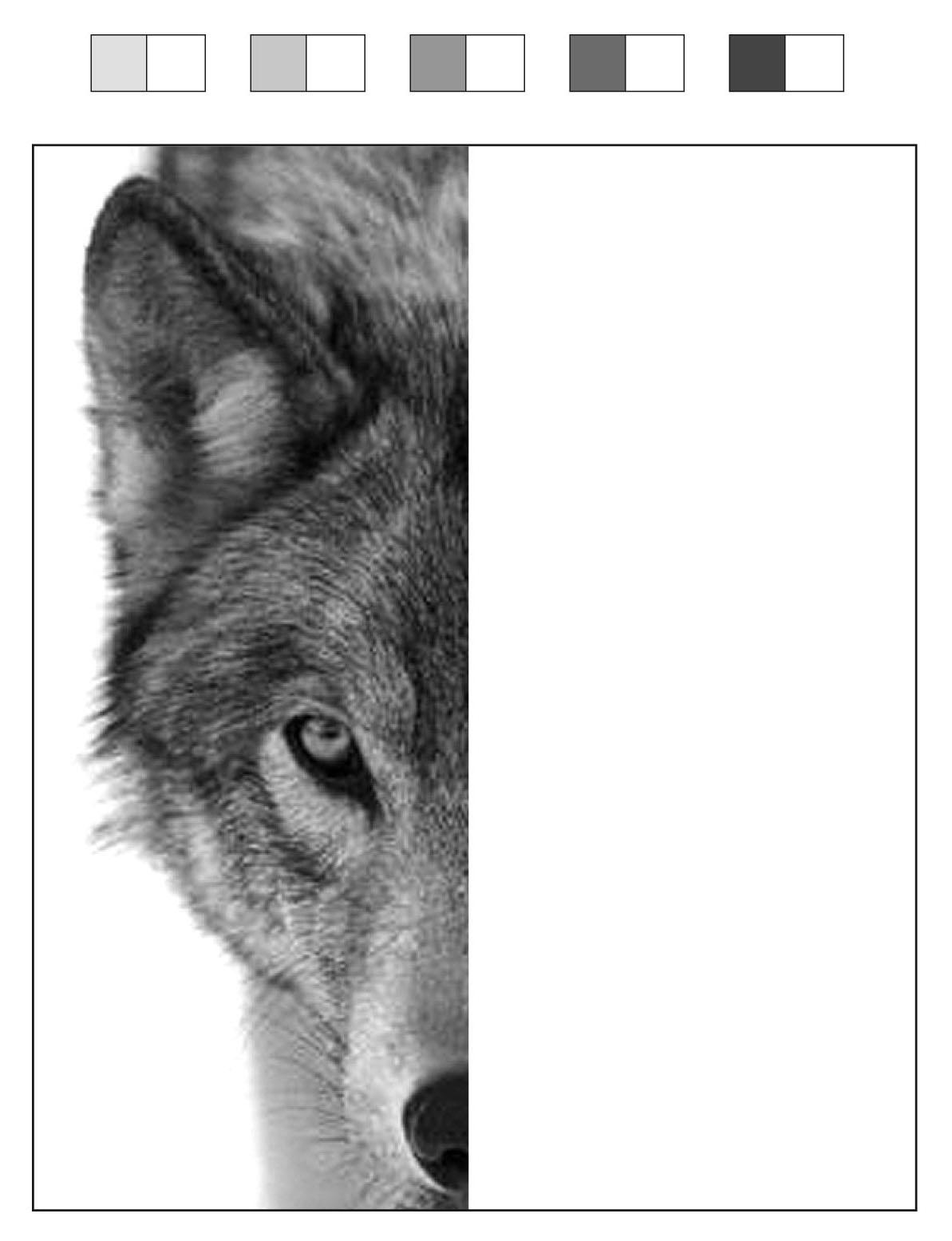 Wolf Sketching Diagram