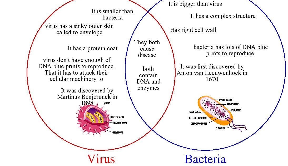 identify the differences between bacteria, viruses, fungi and parasites essay the difference between bacteria, viruses, fungi and parasites are: bacteria are single celled organisms that can rapidly multiple themselves every 10 minutes up to 10 times each bacterial cell, but they do not live or reproduce in a human cell.