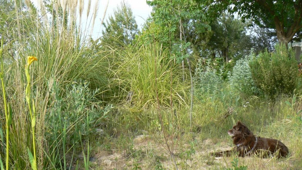 Viendo y aprendiendo de la naturaleza mi jard n natural for Jardin y natura