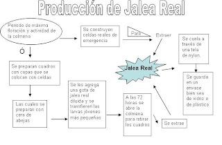 Jalea real descripci n del proceso de producci n for Descripcion del proceso de produccion