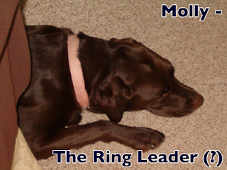 Molly, the ring leader?