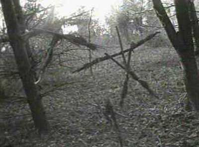 The Blair Witch Project Paper